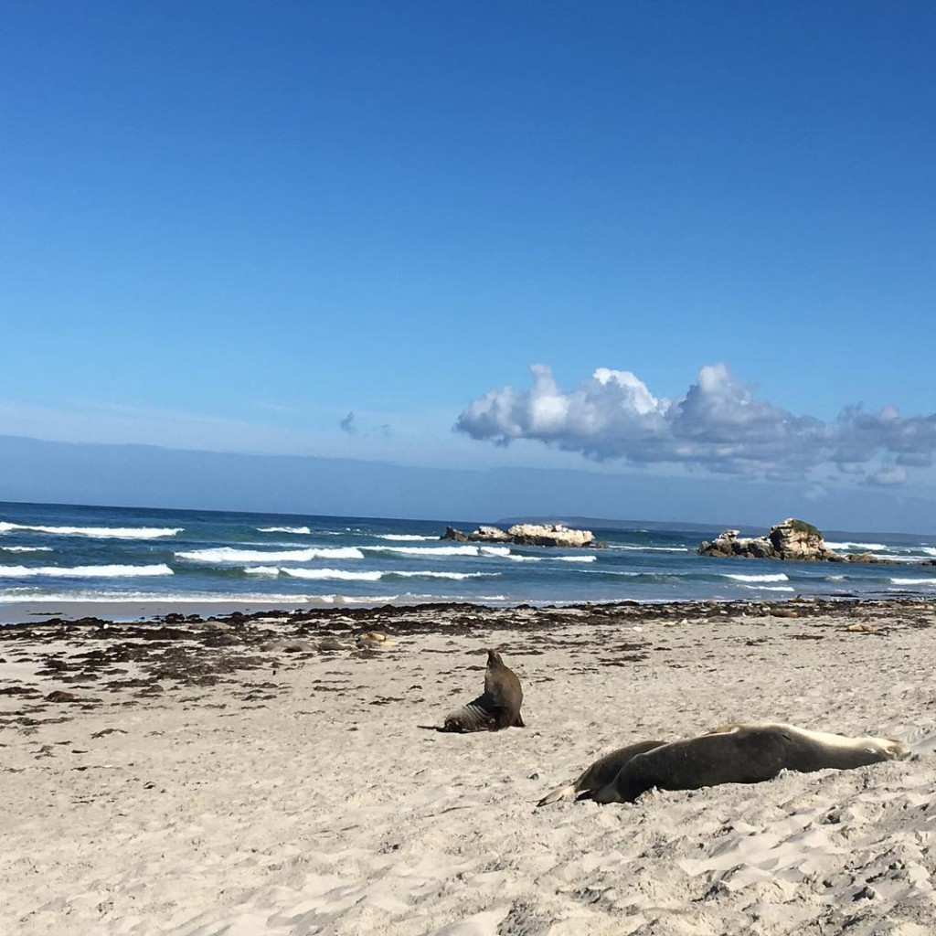 Not a bad way to spend a weekend! kangarooisland familyadventure